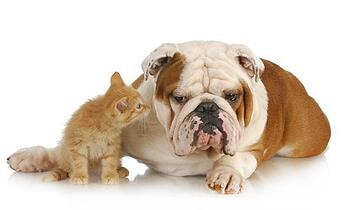 infertility support   kitten and dog pic