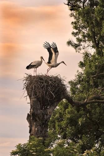 A Family of Two Birds and their Nest