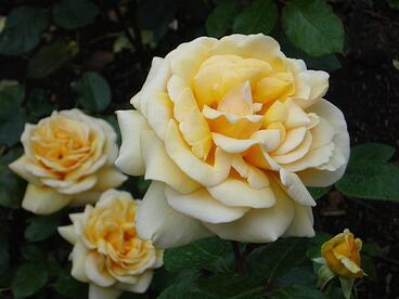 Fertile Yoga Flowers PathtoFertility blog