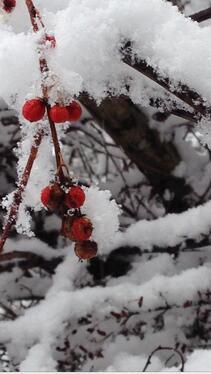 snow cancellation for feritle yoga and prenatal yoga