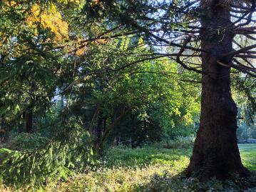 green trees to inspire fertility commitments