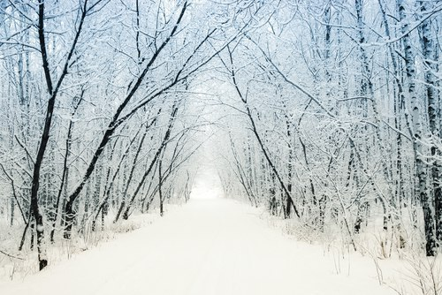 snowy path with trees