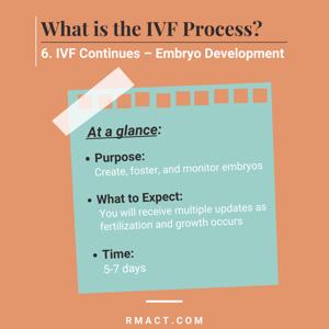 embryo-development-ivf