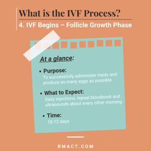 follicle-growth-phase-ivf